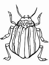 Coloring Pages Insects Primarygames Science Bug Insect sketch template