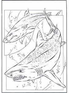 Haie Malvorlagen Delfine Und Wassertiere