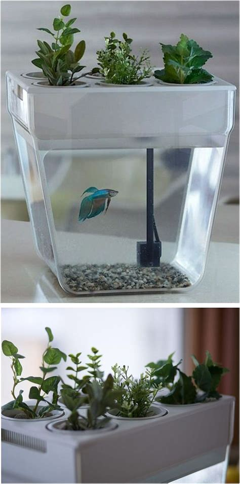fish self feeder 17 best images about aquariums fish on