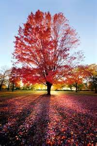 beautiful trees and flowers pictures autumn colors