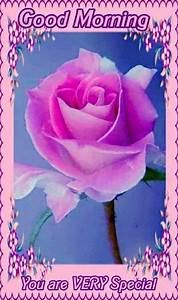 pretty morning pink flower pictures photos and