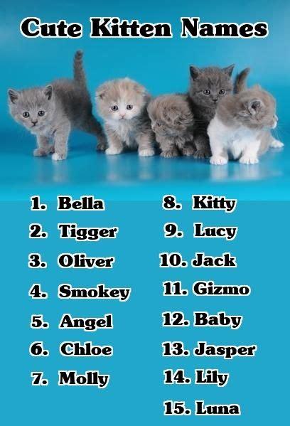 youre   cute kitten names heres  list