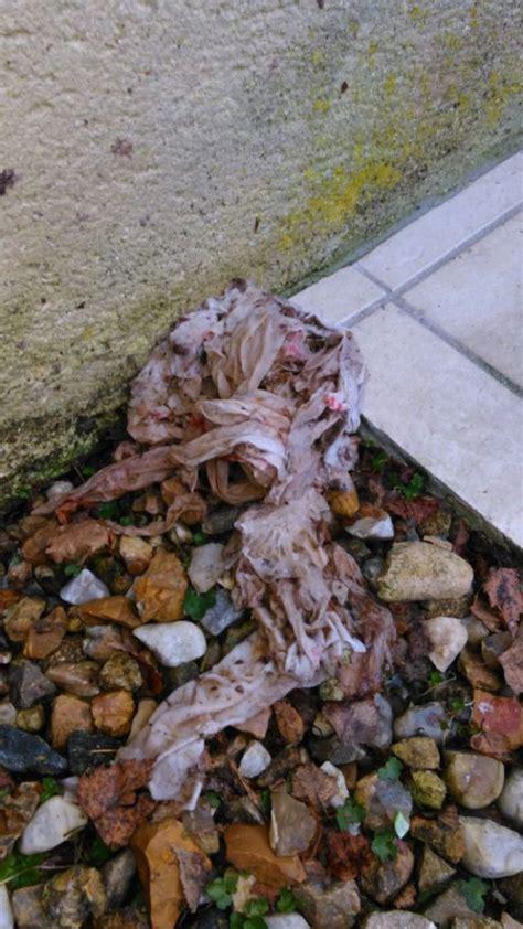 canalisation cuisine bouch馥 débouchage canalisation objets insolites trouvés dans les canalisations