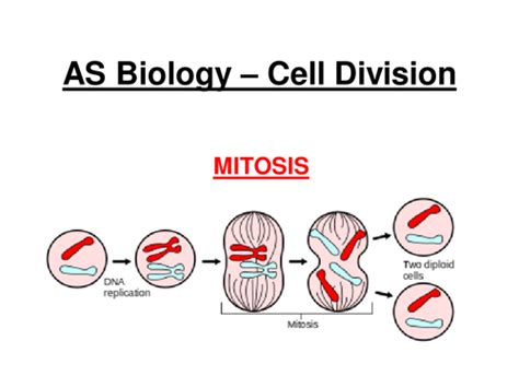 Mitosis Has How Many Cell Divisions Educating Science Teaching Resources Tes