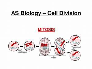 New Aqa As Biology