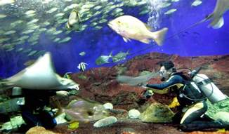 underwater world singapore to on june 26 with lease ending to enjoy lower ticket