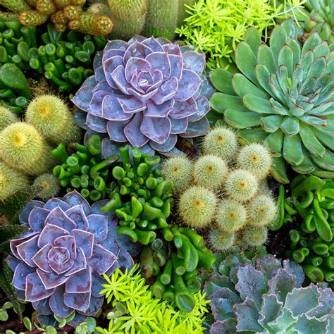 14 Tips for Planting Succulents Outdoors — The Family Handyman