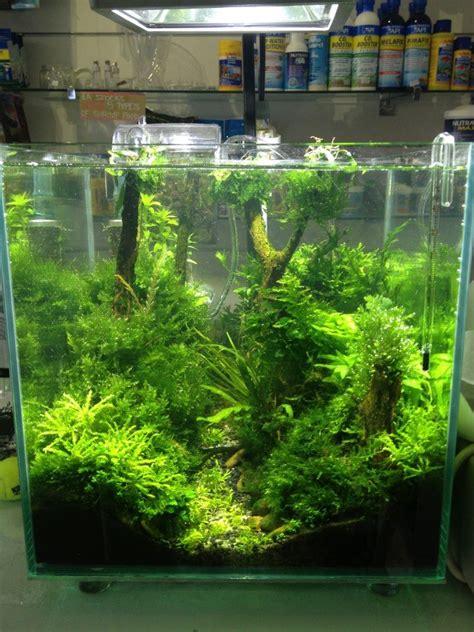 Aquascape Fish Tank by Looks Prehistoric Aquascaping Aquarium