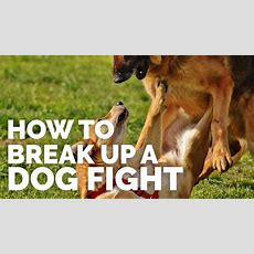 How To Break Up A Dog Fight Youtube