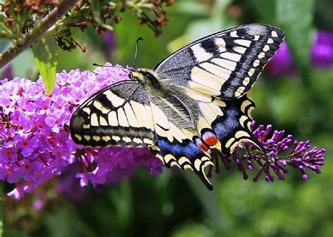 rainbow roses for butterflies and flowers 1 hour nature meditation with