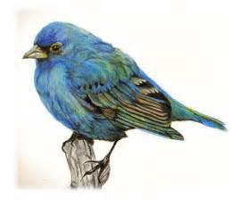 Colored Pencil Bird Drawings
