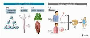 Mitosis | PMG Biology