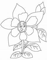 Columbine Flower Yellow Coloring Drawing Pages Getdrawings sketch template