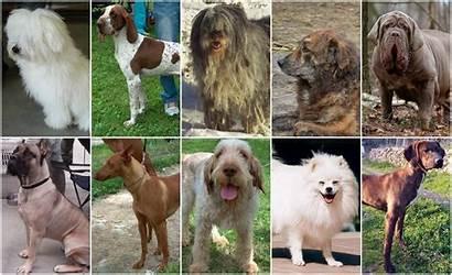 Dog Breeds Italian Types Italy Dogs Ten