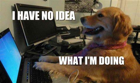 hilarious dog memes  brighten   day doyouyoga
