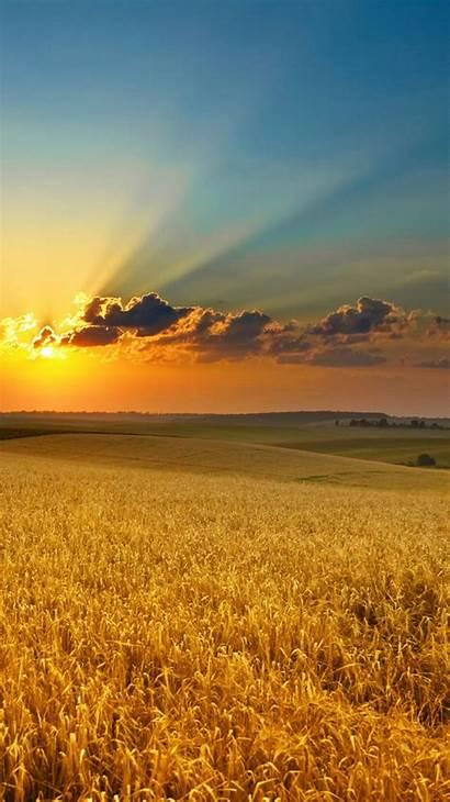 Iphone Nature Wallpapers Sunset Field Summer Golden