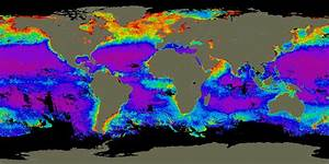 What Is The Level Of The Ocean Chlorophyll In June