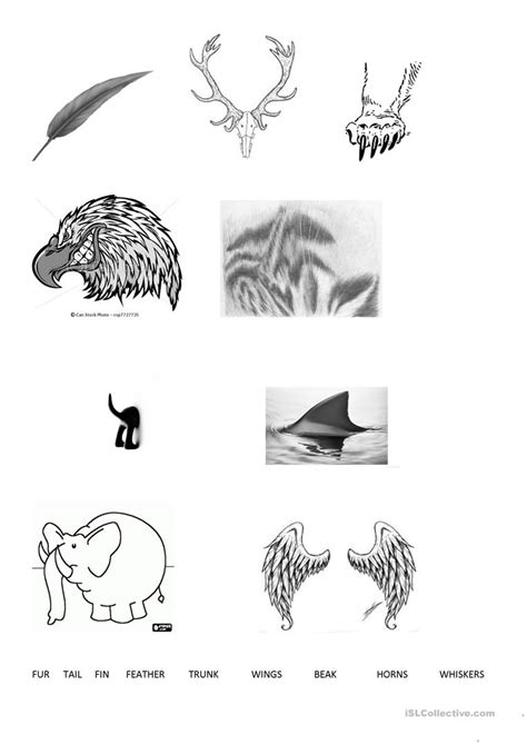 animal body parts worksheet  esl printable