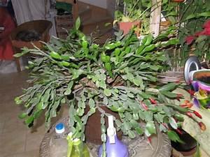 Plantes Grasses Intérieur : plantes grasses ~ Melissatoandfro.com Idées de Décoration