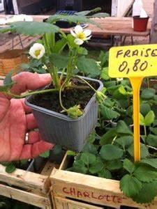 Plant De Fraise : les fraisiers ~ Premium-room.com Idées de Décoration