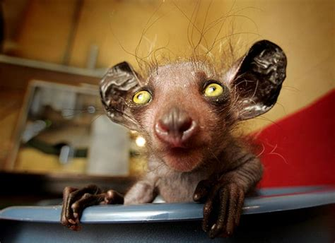 The world's ugliest animals in pictures Environment