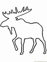 Moose Outline Coloring Printable Deer Drawing Mouse Elk Head Coloringpages101 Drawings Getdrawings Mammals Animals Clipart Paintingvalley sketch template
