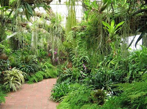 tropical flowering bushes 131 best images about tropical gardens on pinterest