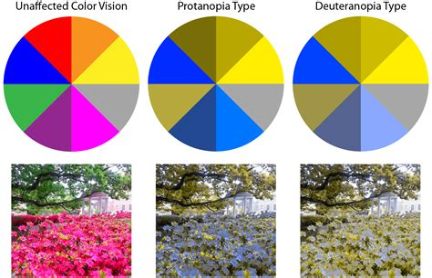 the color blind what are the different types of color blindness iris