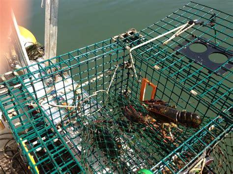 aquaculture netting  catching  breeding  fish