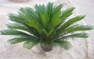 Pflanztopf Für Palmen : palmen hintergrundbilder kostenlos ~ Lizthompson.info Haus und Dekorationen