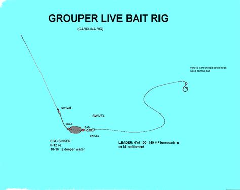 grouper rig fishing fish techniques finder