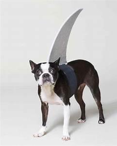 Think Fin: Dog Shark Halloween Costume & Video Martha