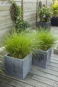 pennisetum setaceum on pinterest With idee allee de maison 16 5 facons de mettre en scane les graminees detente jardin