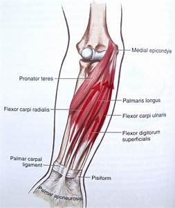 Forearm Pain During Press