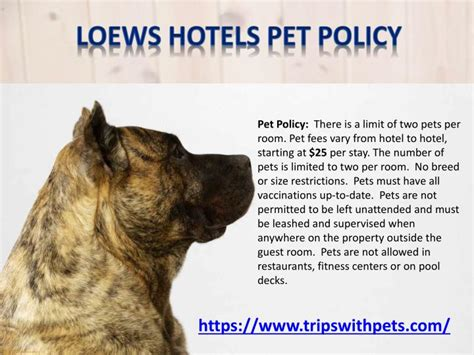 Pet-friendly Policies Pet-friendly Hotels Guide Garage Roof Storage Pulley Vent Pipe Rubber Seal Buildings With Rooftop Access Chicago Erie Pa Hotels Red Inn Hatch Plymouth Rd Ann Arbor Mi Decrabond Metal Tiles