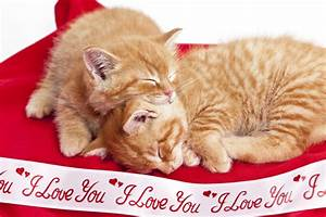10 Ways To Show Your Cat Love On Valentine's Day - CatTime