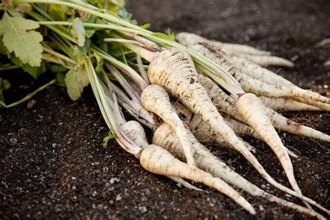 All About Parsnips  Classic Root Vegetable Recipes