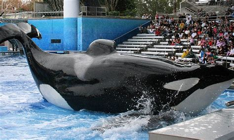 seaworld accused  drugging killer whales  painting