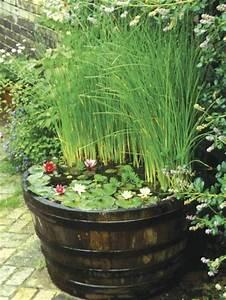 Plante Filtrante Pour Bassin : plantes de bassin en 20 id es jardin et passions ~ Louise-bijoux.com Idées de Décoration