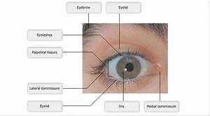 Eye And Ear Diagram Quiz