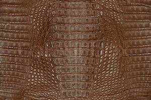 Crocodile skin texture | Stock Photo | Colourbox