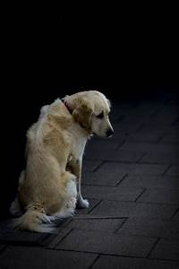 Sad Dog Free Stock Photo - Public Domain Pictures