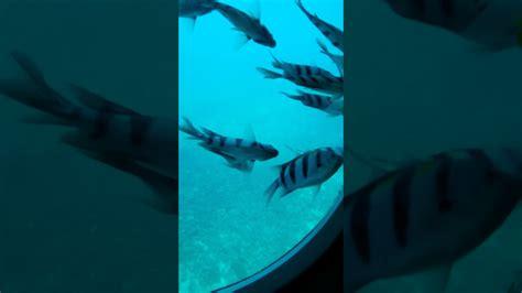 Animasi di bawah laut #1💧💧💧 YouTube