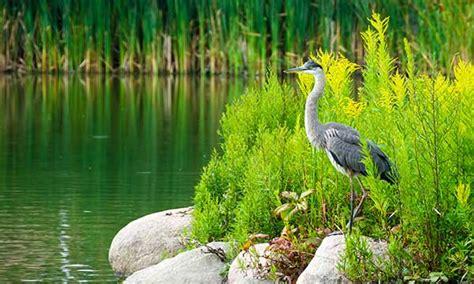 world wetlands day holidaysmart