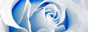 Blue Rose Facebook Cover for Timeline