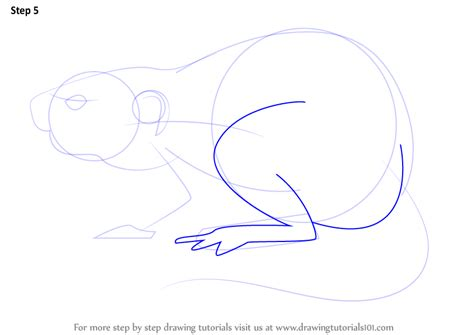 step  step   draw  muskrat drawingtutorialscom