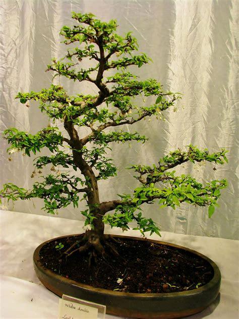 Bonsai Baum Preis by Some Current Interior Design Trends Interior Design