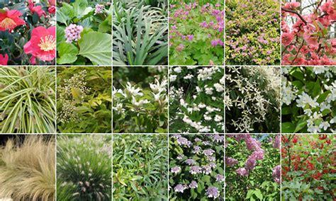 arbusti da terrazzo ecco le piante indispensabili con l arrivo dell estate