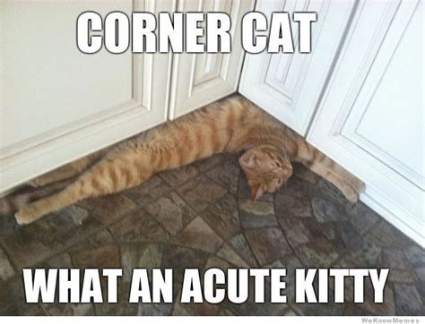 Daily Meme Pictures - your daily funny acute kitty allnerdity