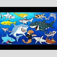 Learning Sea Animals Shark Names With Cartoon & Real Water And Sea Animals For Children Youtube